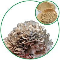 Buy cheap Maitake Mushroom Powder,with Effective Ingredient Grifolan from China Plant Supplier for Wholesale from wholesalers