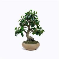 Buy cheap Artificial Ficus Microcarpa from wholesalers