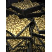 Buy cheap Yellow Holland Potato from wholesalers