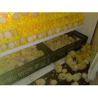 Buy cheap Egg Incubator from wholesalers