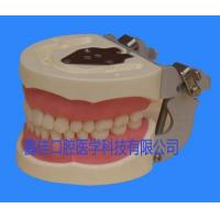 Buy cheap Tooth extraction model from wholesalers
