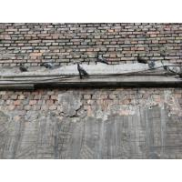 Buy cheap Animals Free Animals / Grunge texture (pigeon, wall, brick) from wholesalers
