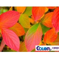 ECO-solvent semi-glossy polyester canvas