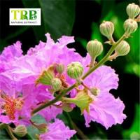Buy cheap Herbal Extract Banaba Leaf Extract from wholesalers