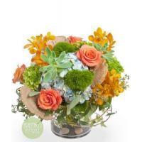 Buy cheap red gerbera daisies flower delivery austin grand statement bouquet from wholesalers