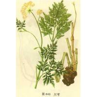Buy cheap herb extract and herb monomer product